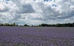 nyár felhő virágmező
