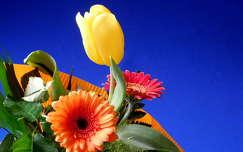 virágcsokor, tulipán, gerbera