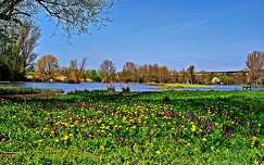 virágmező pad tó