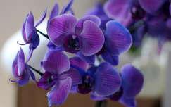 trópusi virág orchidea