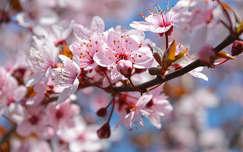 Tavasz, virágzás