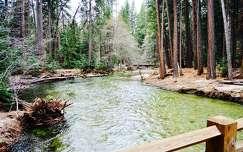 erdő folyó