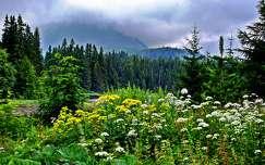 virágmező hegy vadvirág