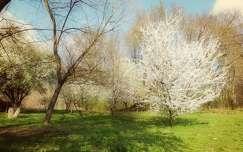 árnyék virágzó fa tavasz