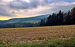 kukoricaföld