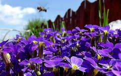 tavaszi virág, magyarország