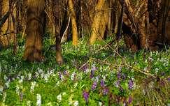 erdő vadvirág virágmező tavasz