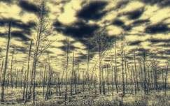 Apokalipszis után
