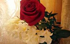 Rózsa, Frézia