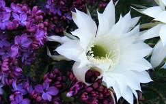 orgona és kaktuszvirág