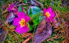 Tavaszi szépségek...