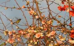 madár kolibri virágzó fa