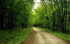 tavasz erdő út