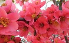 tavasz japánbirs