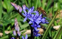 méh tavasz tavaszi virág rovar