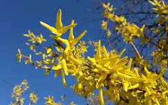 aranyeső tavasz