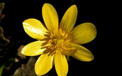tavasz, vadvirág, magyarország