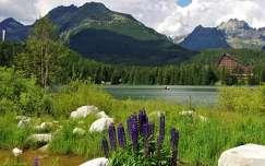 ház tátra szlovákia tavasz tó kárpátok hegy vadvirág csorba-tó