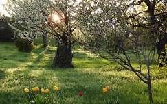 virágzó fa fény tavasz