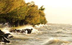 magyarország balaton fa tavasz hullám
