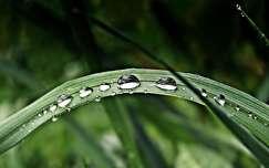 Eső csepp
