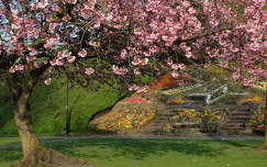 virágzó fa tavasz