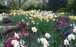 tavaszi virág nárcisz kertek és parkok tavasz