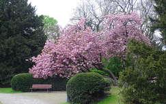 virágzó fa pad tavasz kertek és parkok