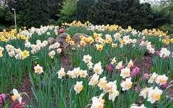 tavaszi virág nárcisz kertek és parkok