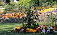 tavaszi virág tavasz kertek és parkok