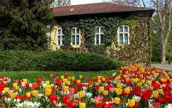 tavaszi virág ház tulipán kertek és parkok tavasz
