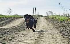 út kutya