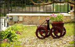 muskátli virágcsokor és dekoráció kertek és parkok