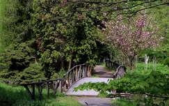 híd kertek és parkok tavasz virágzó fa