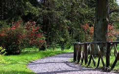 út kertek és parkok tavasz