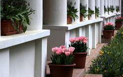tavaszi virág virágcsokor és dekoráció tulipán tavasz