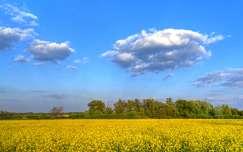 Repceföld, Hercegszántó, Magyarország