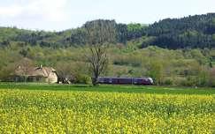 repce virágmező ház magyarország tavasz repceföld