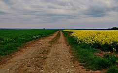 repceföld út repce tavasz