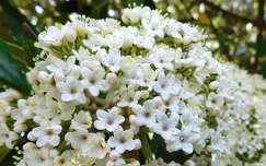 tavasz, fehér virág, magyarország