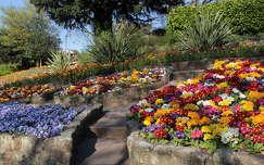 árvácska kankalin tavasz kertek és parkok