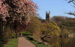 tavasz virágzó fa út