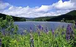hegy vadvirág tó tavasz