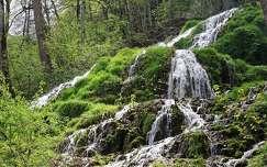 erdő vízesés tavasz