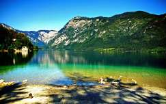 bohinji-tó tó alpok hegy triglav szlovénia tavasz