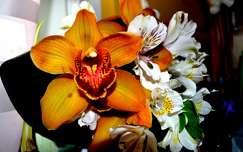 frézia orchidea trópusi virág