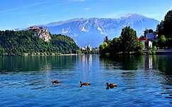 alpok tavasz tó kacsa várak és kastélyok szlovénia hegy bledi-tó