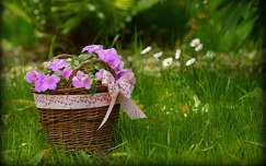 virágcsokor és dekoráció
