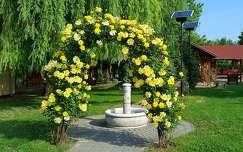 kertek és parkok virágcsokor és dekoráció rózsa