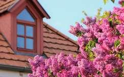 tavaszi virág orgona ablak tavasz
